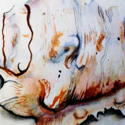 seashell-featured
